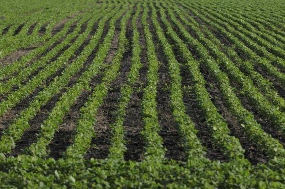 IBGE prevê safra de grãos 1,7% maior no próximo ano.