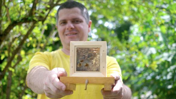 Ir para  <h1>A cria&ccedil;&atilde;o de abelhas nativas sem ferr&atilde;o como atividade de prazer e relaxamento&nbsp;nos tempos livres. Conhe&ccedil;a a hist&oacute;ria das abelhas nativas e o comportamento dos enxames no...