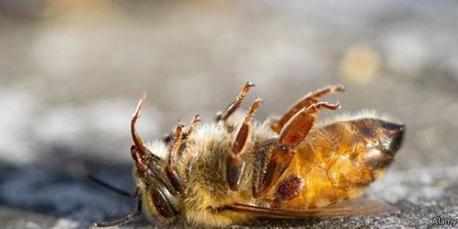 Ir para  <p><big>Doze de outubro de 2018 era para ser s&oacute; mais um dia primaveril no munic&iacute;pio de Mata, que fica a cerca de 80 quil&ocirc;metros de Santa Maria. E como todo dia de primavera, abelhas estariam em intensa...