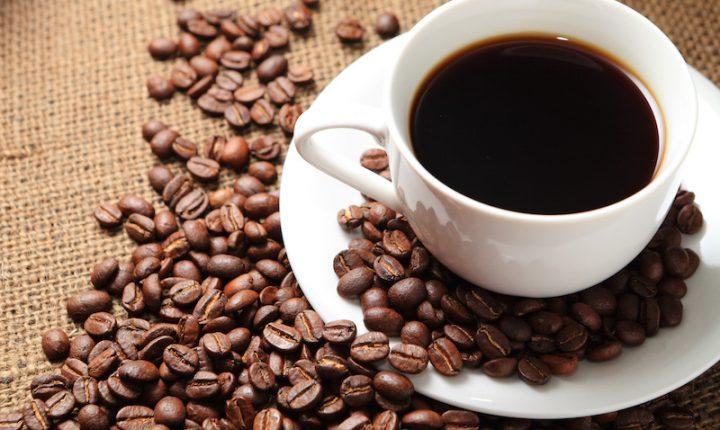 Ir para Pesquisa cria primeiros híbridos de café para a região amazônica.