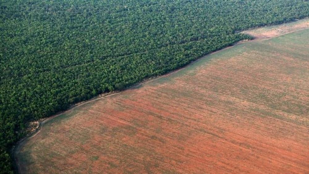Ir para  <p><big>A &aacute;rea com alertas de desmatamento na Amaz&ocirc;nia Legal em 2019 aumentou 85,35% na compara&ccedil;&atilde;o com o ano de 2018. Os dados foram registrados pelo sistema Deter-B, desenvolvido pelo...