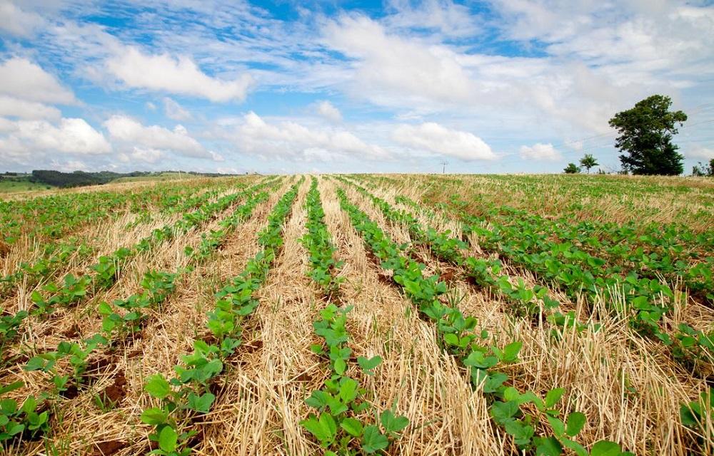Ir para  <p>A &aacute;rea plantada com soja no Brasil em 2020/2021 deve crescer 2,5%, para 37,99 milh&otilde;es de hectares, projetou a consultoria Datagro nesta quarta-feira. O aumento em rela&ccedil;&atilde;o aos 37,05...