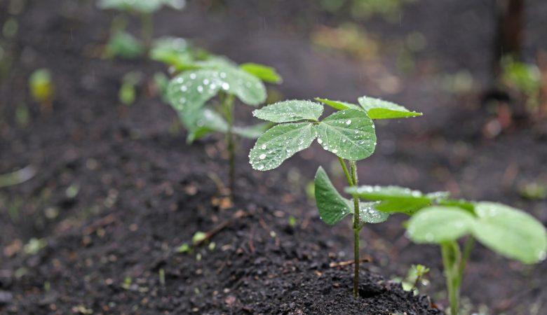 Ir para  <p>Entendo que fazer agricultura &eacute;, sobretudo, um ato de f&eacute;. Semear a terra &eacute; mais que uma tarefa, &eacute; um voto de confian&ccedil;a&nbsp;no clima, no mercado, enfim, no...