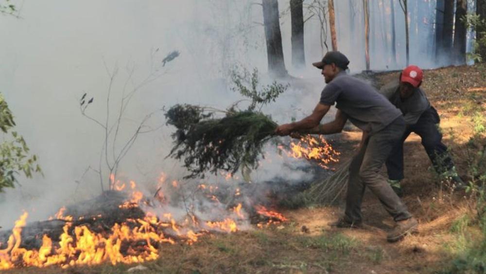 Ir para Metsul emite alerta de risco extremo de fogo em vegetação no RS