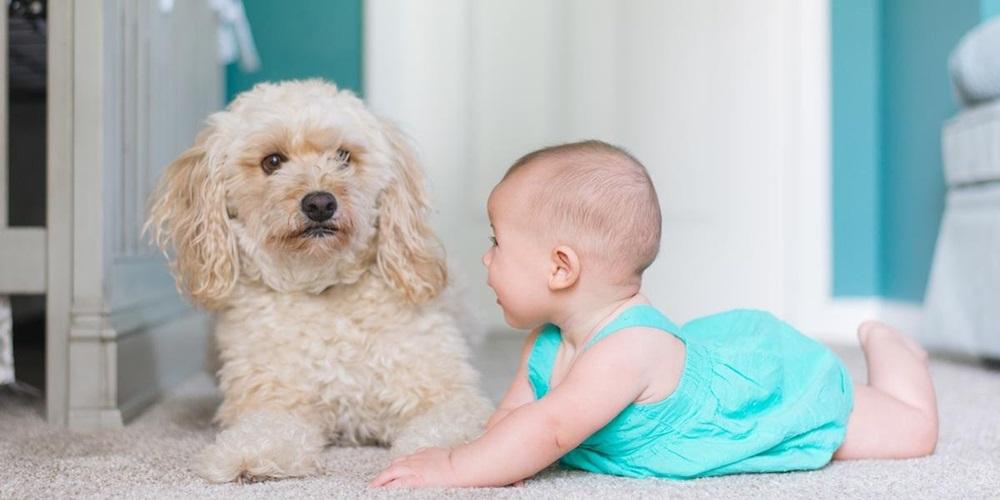 Animais de estimação ajudam no desenvolvimento das crianças